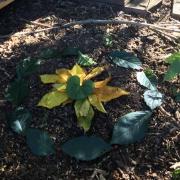 Kraftplatz aus Blättern
