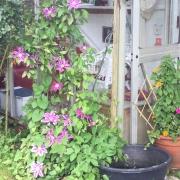 Blumen vor dem Seminarraum